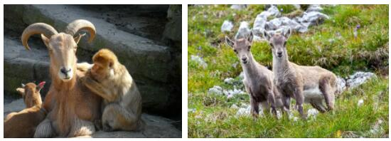 Austria Animals