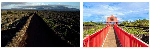 Viticulture culture of the island of Pico (World Heritage)